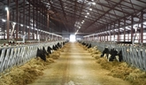 Le groupe TH True Milk étendra son troupeau de vaches laitières à 400.000 têtes