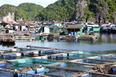 Le Vietnam cible le développement durable de l'aquaculture