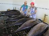 Hausse des exportations nationales de thon vers l'Europe