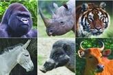 Trois millions d'USD pour protéger les espèces en danger au Vietnam