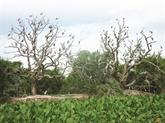 L'île aux aigrettes de Chi Lang Nam à Hai Duong