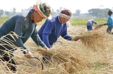 Thaïlande : le système de garantie des prix du riz sera mis en œuvre en octobre