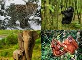 Les médias devraient hausser le ton sur le trafic d'animaux sauvages