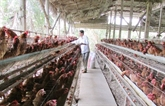 Conférence internationale sur la production animale et l'environnement