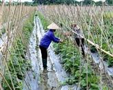 Nord : l'agriculture s'oriente vers la production marchande