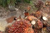 Indonésie privilégie les importations de viande, de riz et de sucre d'Inde