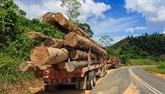 La Malaisie s'attaque à l'exploitation forestière et minière illégale et à la contrebande