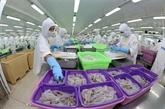 Les crevettes vietnamiennes dominent le marché japonais