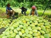 Les fruits locaux s'efforcent de reconquérir le marché domestique