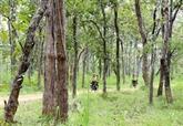Près de 270.000 ha de forêts obtiennent des certificats internationaux