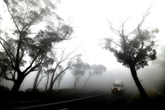 Australie: la pluie redonne de l'espoir dans la lutte contre les incendies