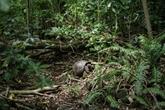 L'île seychelloise de Cousin ou le retour à la nature pour sauver un oiseau