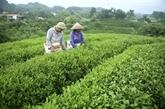 Le festival de Thai Nguyên rend hommage à la filière du thé
