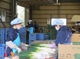 La préfecture japonaise d'Ibaraki a besoin de plus de stagiaires vietnamiens
