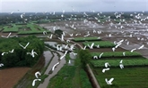 Thua Thiên-Huê prend des mesures pour protéger les oiseaux sauvages