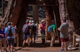 Épidémie de gastro-entérite dans le parc national de Yosemite