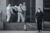 Virus : la Chine annonce un troisième mort et près de 140 nouveaux cas