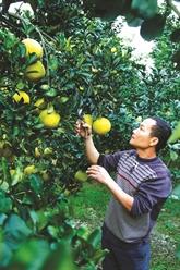 Ly Van Dang, un modèle de réussite chez les Dao