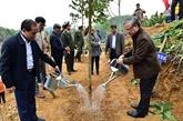 Lancement de la Fête de plantation d'arbres du printemps 2020 à Tuyên Quang
