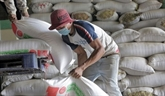 Le Cambodge exporte 7 millions de tonnes de produits agricoles en 2019