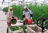 Le secteur de l'agriculture vise une croissance de 3% en 2020