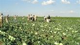Des propriétaires agricoles vietnamiens en Russie