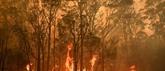 Feux de forêts : l'Australie évalue les dégâts après une journée catastrophique
