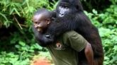 RDC : un écogarde tué dans le parc national des Virunga