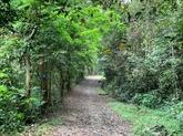 L'économie forestière, un atout de Vinh Phuc