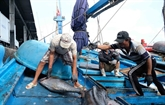 Le Vietnam travaille dur pour lutter contre la pêche INN