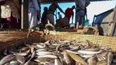 Cambodge : les exportations de produits aquatiques reculent de plus de 84%
