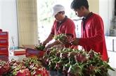 Exportations agricoles vietnamiennes vers l'UE en hausse