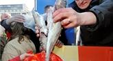 Pêche : quotas restreints pour le cabillaud en mer Baltique en 2021