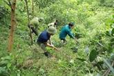 Le Vietnam recevra plus de 51 millions d'USD en réduisant les émissions deCO2