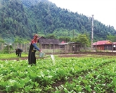 À Diên Biên, Muong Nhé à l'assaut de la pauvreté