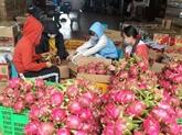 Séminaire sur les exportations de fruits et légumes vers la Chine