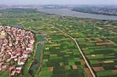 Les légumes bio de Van Duc à l'exportation