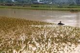 De fortes pluies causent de lourds dégâts à Lào Cai et Dak Nông