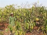 Le PNUD aide Dak Lak à s'adapter au changement climatique