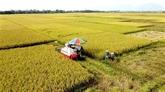 L'agriculture de Vinh Phuc contribue 0,13 point de pourcentage à la croissance
