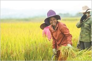 EVFTA  un coup de fouet aux exportations de riz