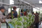 Des projets agricoles au Cambodge soutiennent les Vietnamiens
