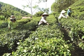 Les coopératives agricoles, plateformes de la croissance économique à Thanh Hoa