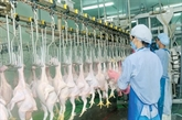 La viande de poulet du Vietnam bientôt exporté à Singapour et Hongkong