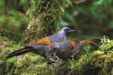 Kon Tum : Kon Plông, un trésor de biodiversité à conserver