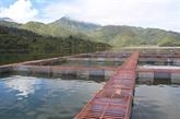 Esturgeons : le Vietnam fait partie des dix premiers producteurs mondiaux