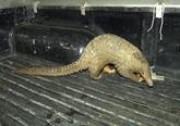 Mise en route de la campagne d'appel à arrêter la consommation des animaux sauvages