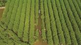 À la découverte de la mangrove de Bàu Ca Cai à Quang Ngai