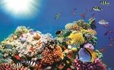 La Réserve marine de Phu Quôc, un vrai paradis sous-marin