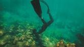 Au chevet des coraux de Dà Nang